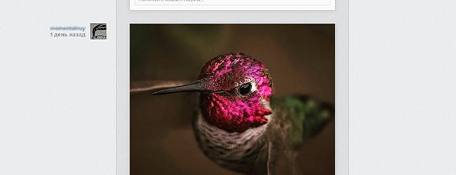 Скачать фото с инстаграм с веб сайта