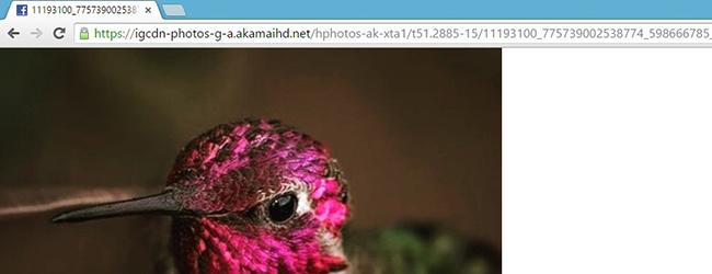 кода фотографии в инстаграмме в браузере